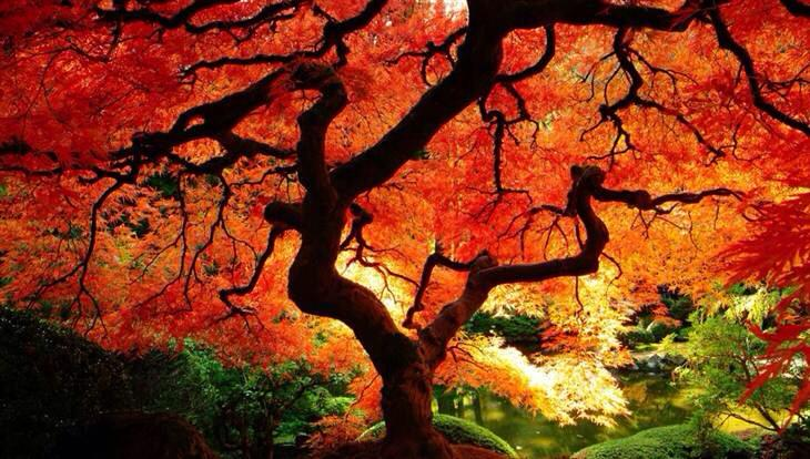 lit-treee.jpg