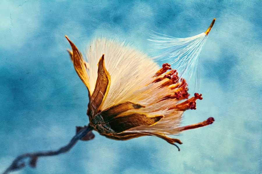 Aparigraha: Η Ελευθερία του να Ζήσεις
